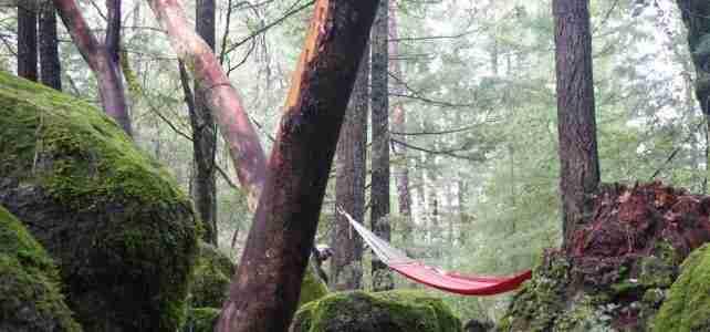 pine_grove_resort_treehouse_hammock