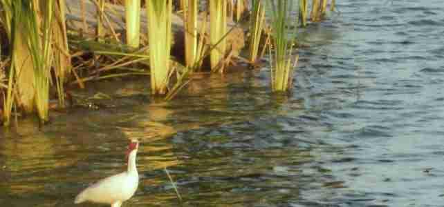 wading_bird_sm